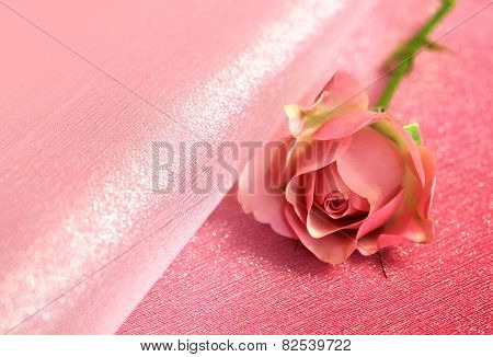 One Pink Rose For Valentines Day