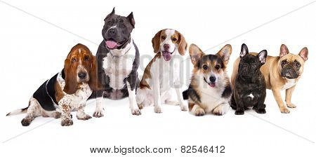 group of dogs,  welsh corgi, beagle, basset