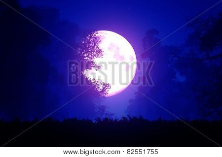 Mysterious Deep Forest at Night in the Moonlight