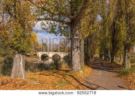 Road and stone bridge over the river Carrion, Palencia