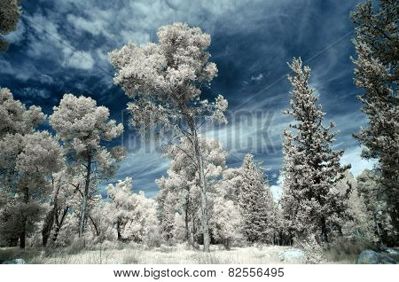 Infrared Winter Forest Landscape.