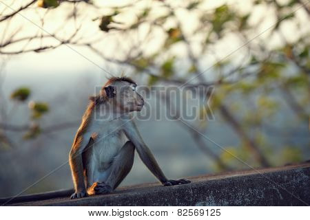 Resentful monkey