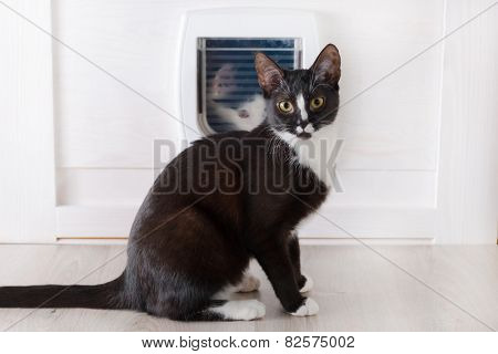 Cat sitting in front of the cat doors and other cat looking through it
