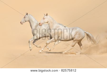 Group of horse run