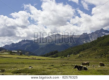Traditional Mountain Landscape In The Summer