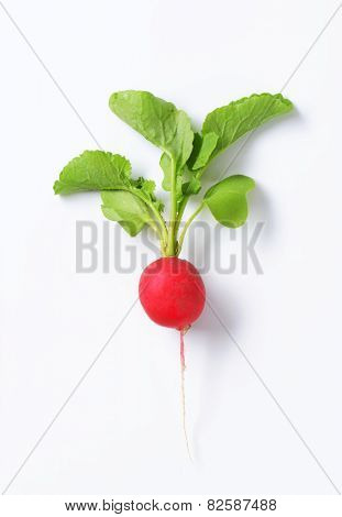 Fresh red radish on white background