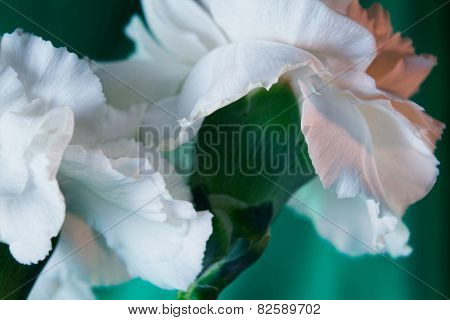 Bright White Carnations