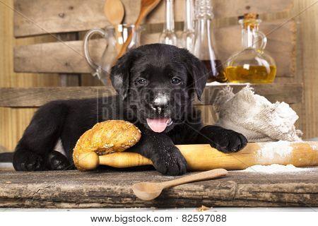 labrador bake cookies