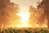 picture of mystique  - Mysterious Magic Forest Sunset Sunrise Romantic 3D Artwork - JPG