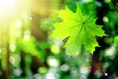 stock photo of tree leaves  - forest trees leaf - JPG