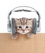 foto of puppy kitten  - Funny kitten cat in headphones in cardboard box - JPG