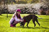 stock photo of boxers  - Child with a boxer dog at the city park - JPG