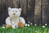 stock photo of cute bears  - Cute teddy bear sitting alone in the green with old wooden background - JPG