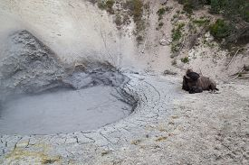 pic of boiling water  - A volcanic muddy hot pool with boiling clay water with a large male bison resting near by at Yellowstone National Park - JPG