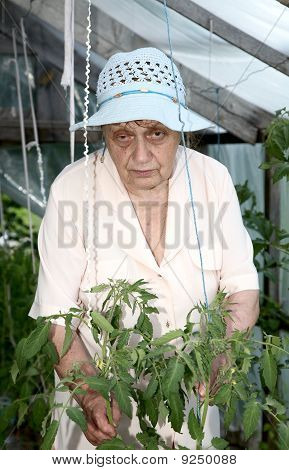 The Old Woman In A Hothouse At Bushes