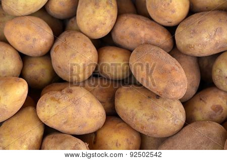 Kennebec White Potatos