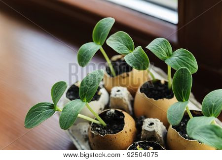 Sprouts Growing From An Egg Shell