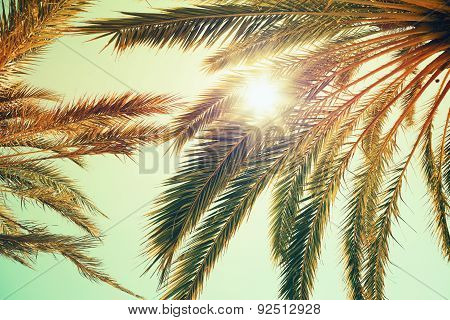 Palm Trees And Shining Sun Over Bright Sky