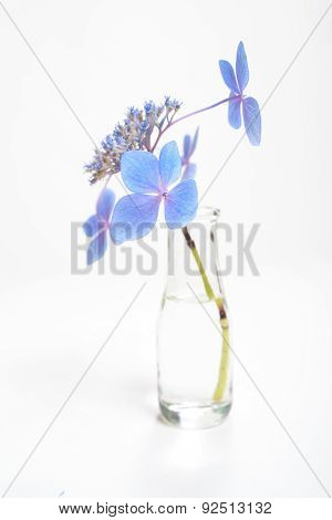 Blue Blossoms On Long Stem In Bottle Of Water
