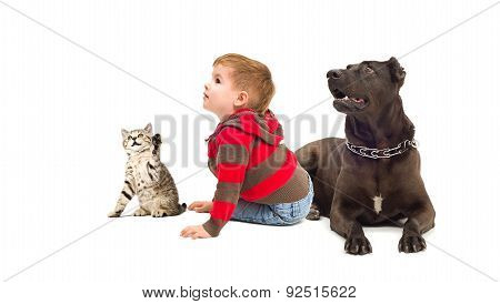 Curious boy, a dog and a kitten