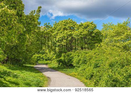 A Beautiful Green Glade