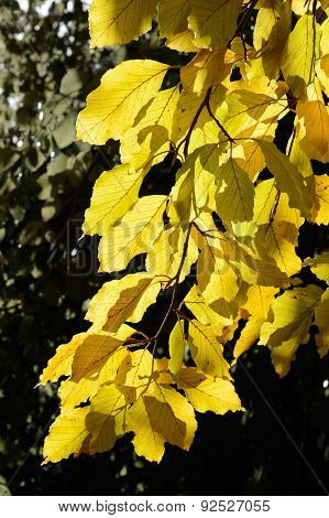 Autumn Leaves On A Sunny Day
