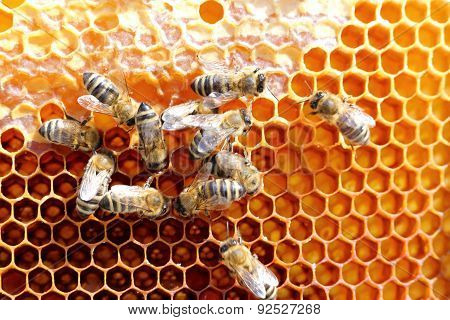 Teamwork Of Some Honey Bees