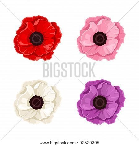 Four colorful poppies. Vector illustration.