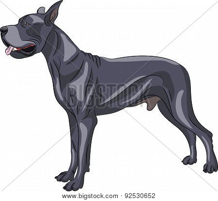Vector. Great Dane.