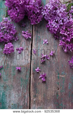 Background With Splendid Lilac Flowers