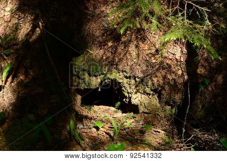 Wildlife Bestial Hole In The Coniferous Forest Desert Spring