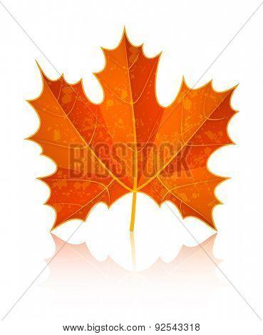 Autumn dry maple leaf. Eps10 vector illustration. Isolated on white background