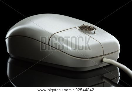 Bug On Mouse Isolated On Black