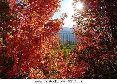 Maple Window
