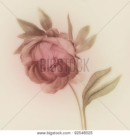 art vintage watercolor blurred floral pattern with pink purple peony isolated on light gold background with space for text