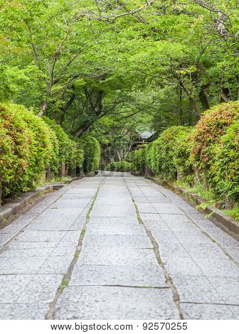 Japanese garden and concrete pathway in summer