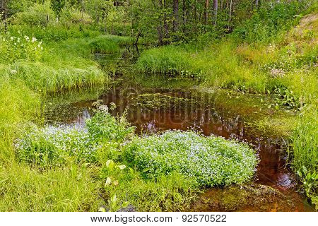 stream in forest