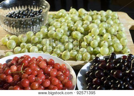 Harvest summer fruits