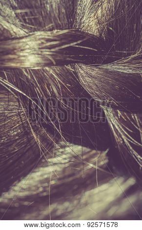 Macro Of Hair