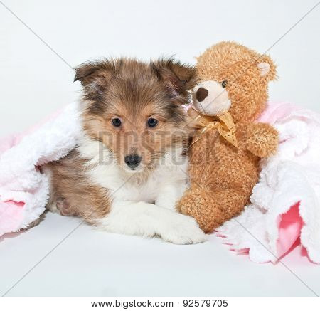 Bed Time Puppy