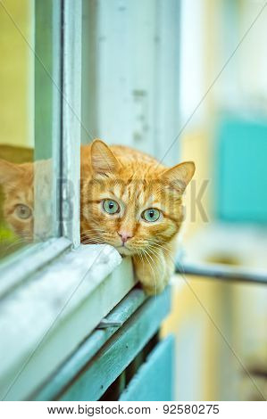 Orange Cat Lying On The Window Sill