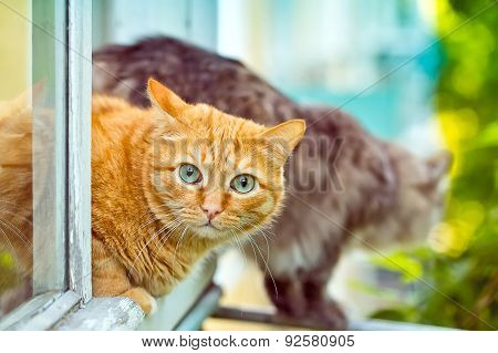 Red And Grey Cat Sitting On The Window Sill
