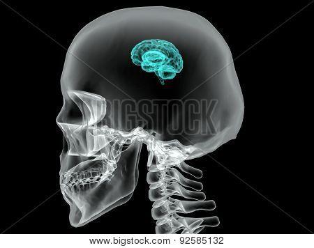 Concept of an Active Human Brain on a Dark Vector