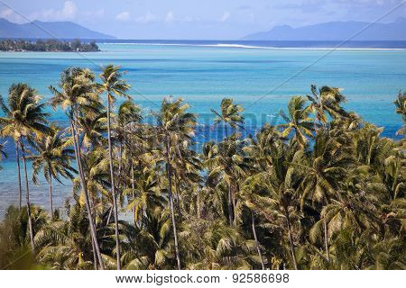 Azure lagoon of island BoraBora Polynesia. Mountains the sea palm trees.