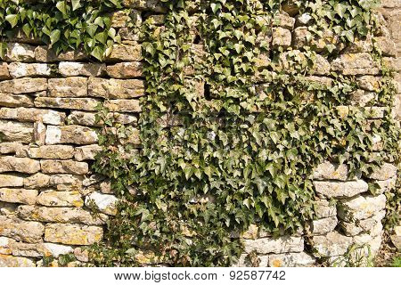 Ivy Wall