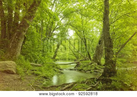 Magical Forest Swamp
