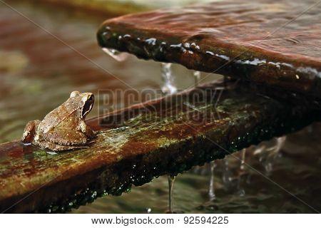 frog near water