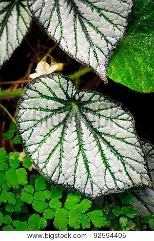 Nice exotic foliage - macro photo