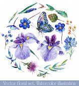 picture of wildflower  - Watercolor irises cornflower wildflowers leaves berry butterfly - JPG