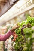 image of close-up middle-aged woman  - Close Up Of Woman Choosing Salad In Supermarket - JPG